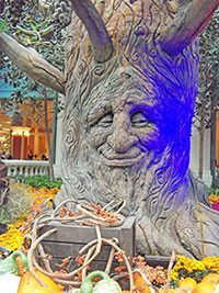 Talking Tree at the Bellagio